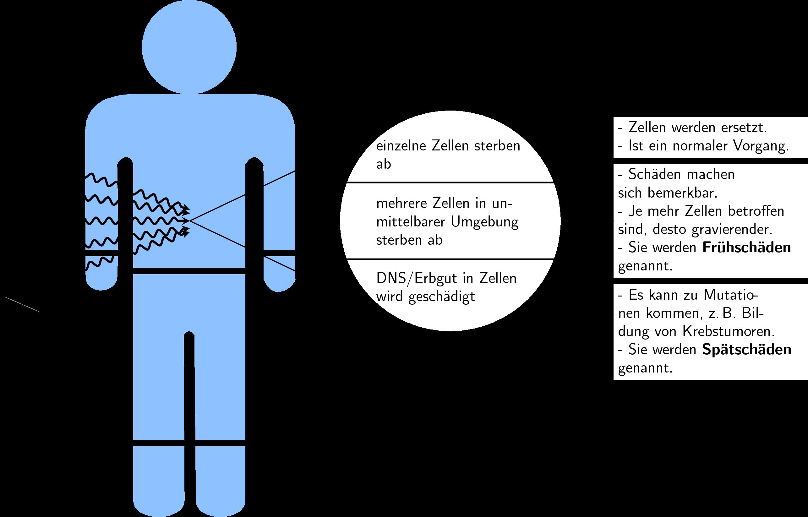 4 Doppelstunde Biologische Wirkung